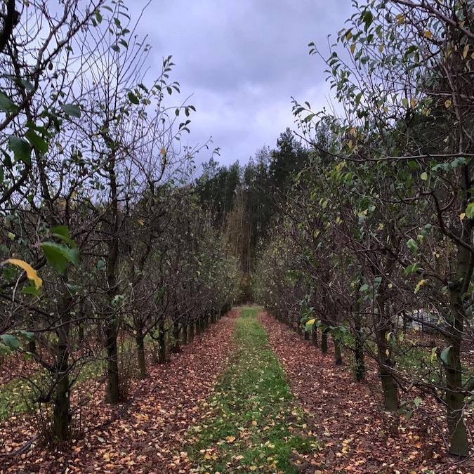 Wycena drzew owocowych